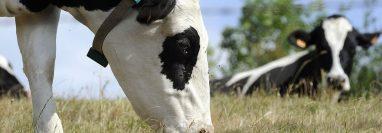 El aumento en el precio global de los productos lácteos encareció el índice de alimentos que elabora la FAO.