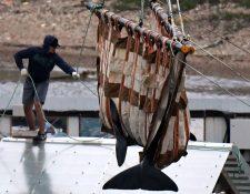 Dos orcas fueron liberadas este jueves, el proceso tomará cuatro meses.