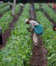 El presidente de Estados Unidos, Donald Trump aseguró en un tuit que México había accedido a empezar a comprar grandes cantidades de productos agrícolas.(Foto Prensa Libre: EFE)