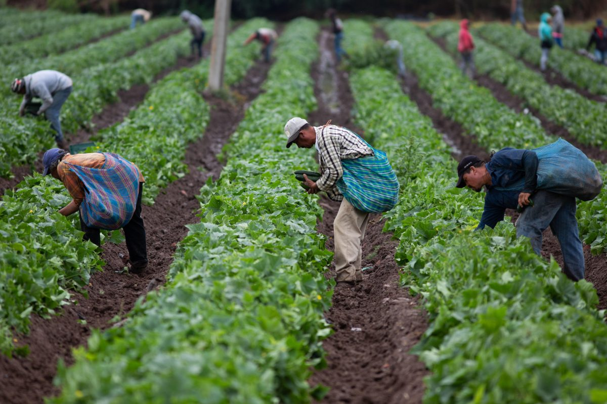 Entre estira y encoge, México evade confirmar si comprará más productos agrícolas a EE. UU.