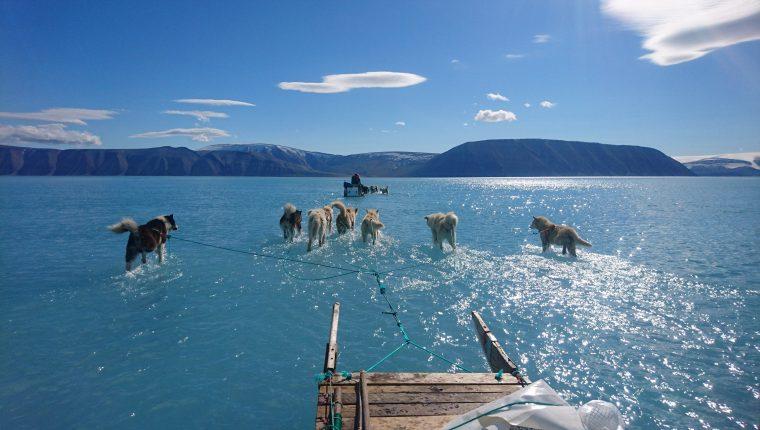 Fotografía facilitada por el Instituto Metorológico de Dinamarca que muestra la fotografía tomada por Steffen M. Olsen, uno de sus investigadores, en el noroeste de Groenlandia el pasado 13 de junio en la que se ve un trineo que avanza por el hielo derretido, con las patas de los perros sumergidas en el agua en el fiordo de Inglefield.
