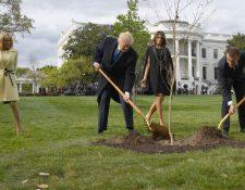 Donald Trump y Emmanuel Macron plantaron un un árbol en abril de 2018 en la Casa Blanca.  (Foto Prensa Libre: AFP)