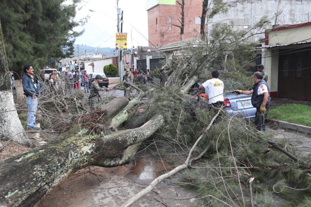 De acuerdo con la comuna hay 86 árboles que representan peligro en la ciudad
