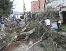 El pasado 6 de junio más de 20 árboles cayeron sobre vehículos y edificios, la mayoría eran de la zona 3. (Foto Prensa Libre: María Longo)