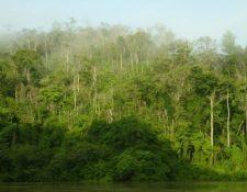 En el sector forestal existe interés de inversión por parte de inversionistas extranjeros, según el informe de Pronacom. (Foto Prensa Libre: Hemeroteca)