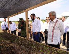 Bukele y López Obrador conocen cómo se gestiona el plan Sembrando Vidas, en Tapachula. (Foto Prensa Libre: Presidencia de El Salvador)