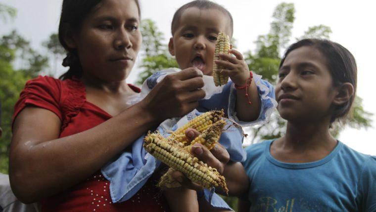 """Más de un millón 323 mil guatemaltecos necesitan ayuda """"urgente"""" para alimentarse"""