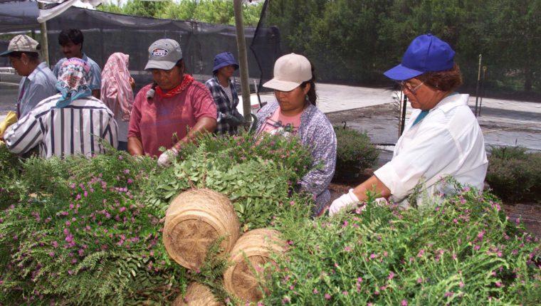 En Guatemala más de seis millones de personas se benefician por el envío de remesas familiares, según la OIM. (Foto Prensa Libre: Hemeroteca)