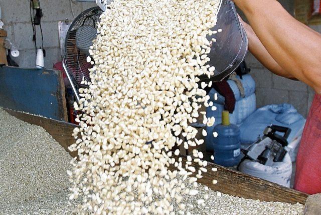 El precio del quintal de maíz subió Q11 en junio, según el reporte de Diplan. En la actualidad hay oferta decreciente. (Foto Prensa Libre: Hemeroteca)