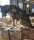 Agentes Antinarcóticos de Guatemala con la ayuda de Estados Unidos hicieron la incautación de cocaína más grande que se ha registrado en Guatemala en 2019. (Foto Prensa Libre: PNC)