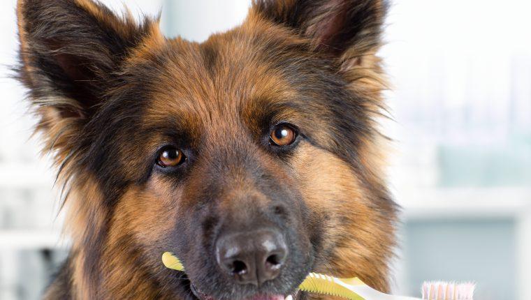 Muchos perros muestran signos de enfermedad en las encías debido a que sus dueños no le prestan la atención a su salud bucal. El mal aliento suele ser la primera señal de que algo no está bien. (Foto Prensa Libre: Servicios)