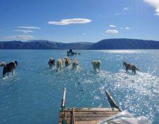 Un grupo de perros avanza sobre el agua, después de que se derritiera el hielo en una parte de Groenlandia) Foto Prensa Libre: Steffen M. Olsen)