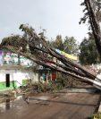 Tres árboles cayeron en la 17 avenida de la zona 3 altense. (Foto Prensa Libre: María José Longo)