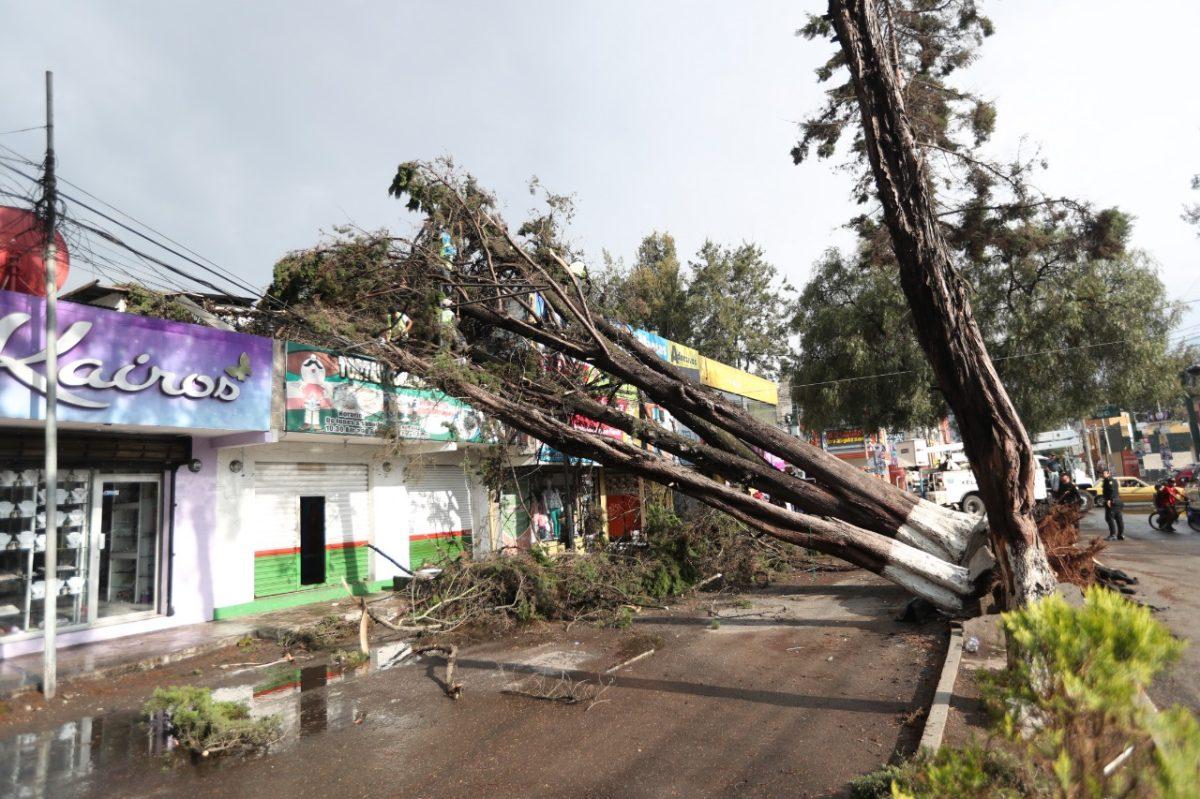 Cayeron 25 árboles: Lluvia y viento causan estragos en Xela