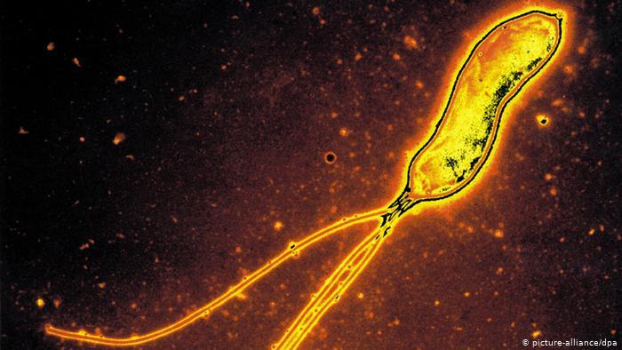 Helicobacter pylori, una bacteria que porta la mitad de la humanidad. (picture-alliance/dpa)