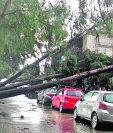 El 14 de junio varios árboles cayeron en Quetzaltenango a raíz de la fuerte lluvia.(Foto Prensa Libre: Hemeroteca PL)