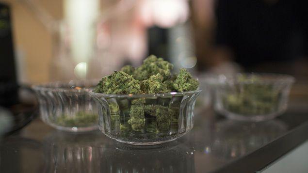 Según fuentes de la industria, en abril último había dos mil peticiones para abrir tiendas de cannabis en Ontario, Canadá. (Foto Prensa Libre: AFP)