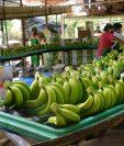 México produce más de dos millones de toneladas de plátano cosechadas en 16 entidades del país, entre las que destaca Chiapas como líder nacional de producción. (Foto Prensa Libre: cuartopoder.mx)