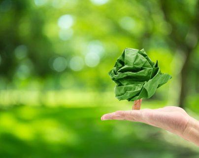 El Día Mundial del Medio Ambiente se celebra cada 5 de junio, desde 1972. (Foto Prensa Libre: Servicios).
