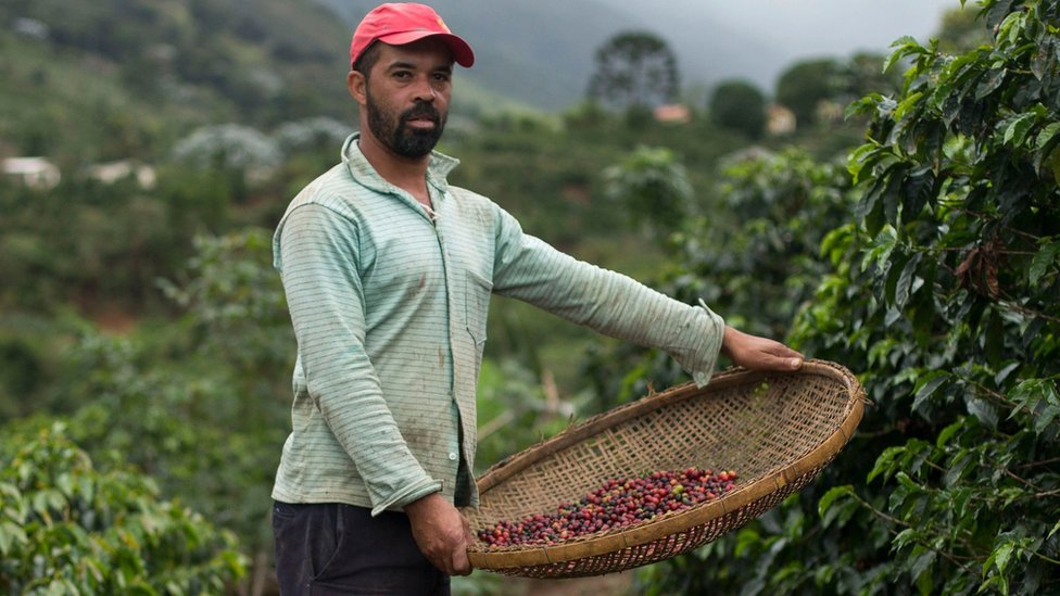 Cómo te puede afectar la crisis mundial del café (y por qué está detrás de la oleada migratoria de Centroamérica)