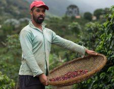 Los productores de café de América Latina están sintiendo los efectos de la crisis.