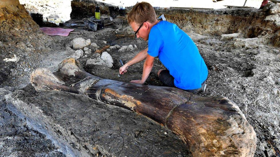 La impresionante foto del gigantesco hueso de dinosaurio descubierto en Francia