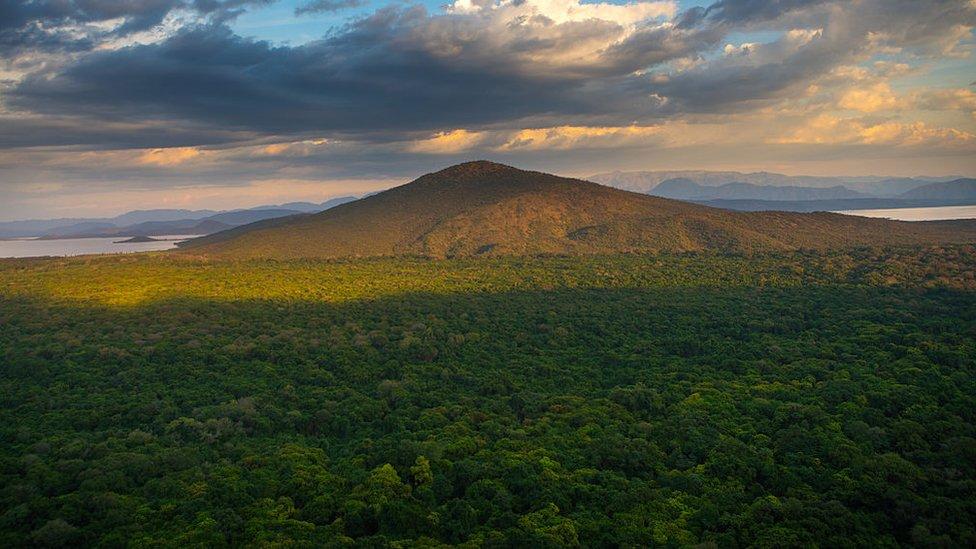 El país que logró el récord de plantar más de 350 millones de árboles en 12 horas