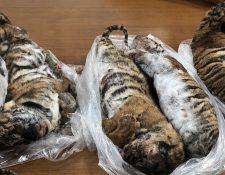 Los siete tigres eran llevados en el baúl del vehículo. (Foto Prensa Libre: AFP)