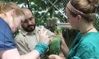 Lo loros son una de las especies más traficadas. (Foto Prensa Libre: Cortesía Arcas)