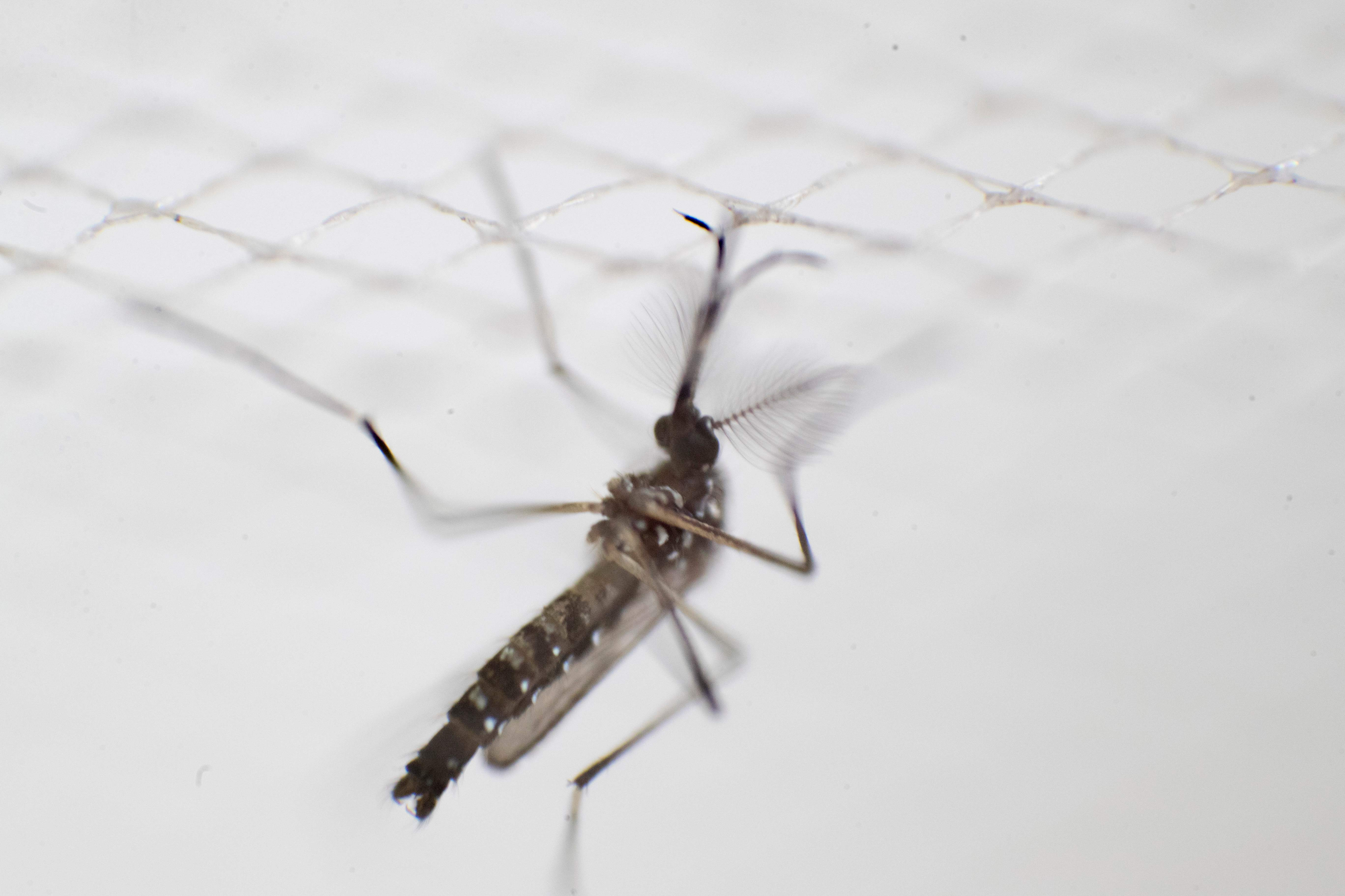 Medicina para combatir el dengue