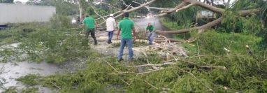 Varios árboles fueron derribados por el viento en Tecún Umán, San Marcos, este lunes 22 de junio. (Foto Prensa Libre: Alex Coyoy)