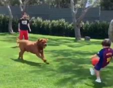 Hulk, el perro de Messi intenta quitarle el balón a Mateo. El crack argentino jugó sacarrín con sus hijos y su mascota. (Foto Prensa Libre: Redes)