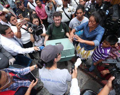 Durante el decomiso las autoridades localizaron aves, roedores, conejos y peces. (Foto Prensa Libre: Esbin García)