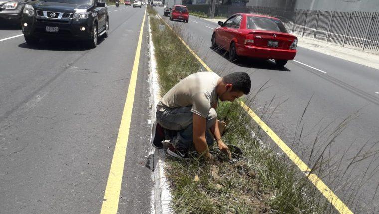 El piloto planta los árboles en el Bulevar San Cristóbal. (Foto Prensa Libre: PMT Mixco).