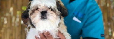 La tiendas Paws poseen servicio de veterinaria, estética canina, y otros servicios. (Foto, Prensa Libre: Facebook Paws Veterinaria).