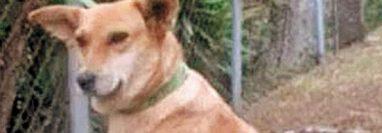 La adopción cambia la vida de los perros. Foto Prensa Libre.
