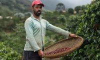 Persona cosechando café. Foto BBC