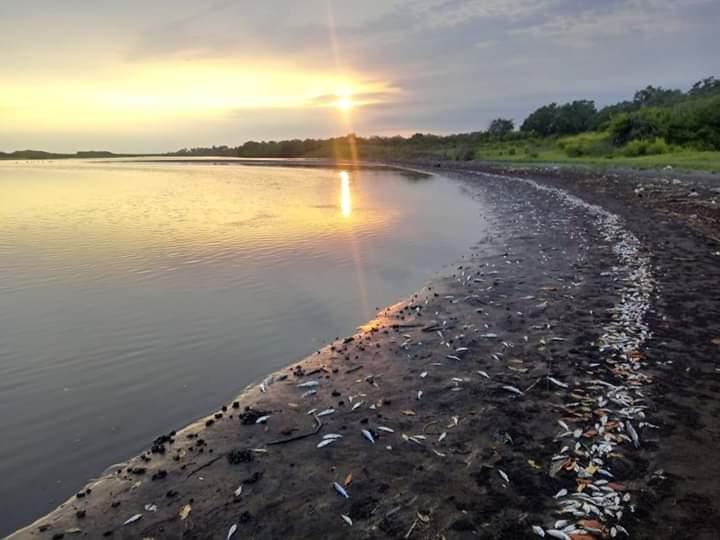 Muerte de peces alarma a pobladores en la playa de Tecojate, en Escuintla