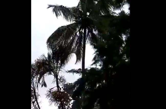 Fuerte viento en El Quetzal, San Marcos. (Foto Prensa Libre: Conred).