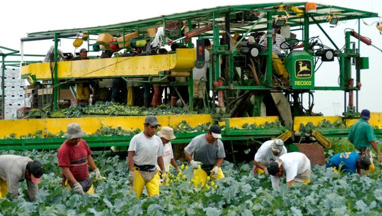 La mayoría de inmigrantes en Immokalee son agricultores que laboran en las granjas y procesadoras de tomates y hortalizas. (Foto Prensa Libre: Hemeroteca PL)