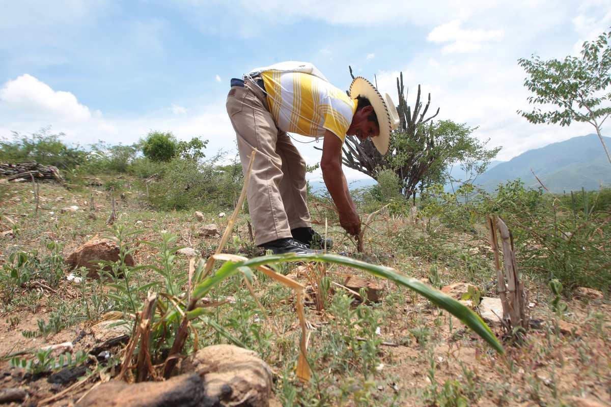 Casi tres mil familias buscan adaptarse las condiciones climáticas del Corredor Seco
