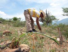 En los últimos años la falta de lluvias ha causado pérdidas en diferentes áreas del Corredor Seco. (Foto Prensa Libre: Hemeroteca PL)