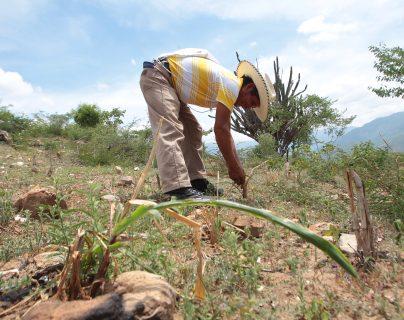 La lluvia no ha sido generalizada en el territorio nacional, y en lugares como San Pedro Ayampuc, en Guatemala, y algunos sitios de Zapaca donde la cantidad de agua ha sido baja y esto podría afectar a los pequeños agricultores. (Foto Prensa Libre: Hemeroteca PL)