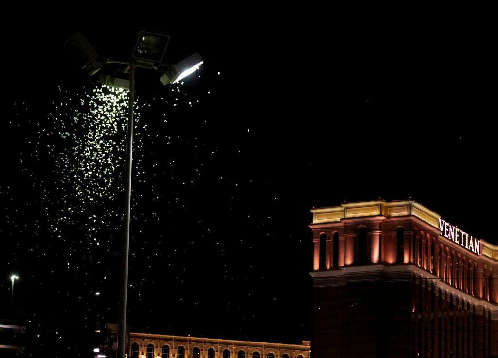 Una invasión de saltamontes llega a Las Vegas