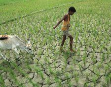 Un estudio de la ONU arroja datos sobre el impacto de las altas temperaturas en las regiones del planeta.