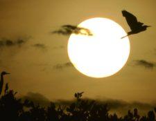 Los ciclos de luz y oscuridad y las fases lunares determinan la actividad de los animales. CHAIDEER MAHYUDDIN/GETTYIMAGES