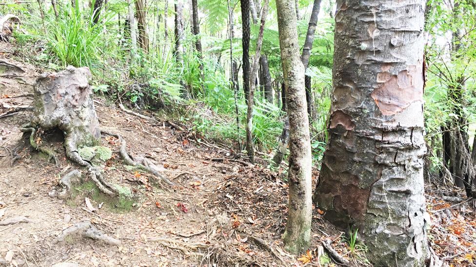 El increíble resto de árbol moribundo que se mantiene vivo gracias a sus vecinos en el bosque
