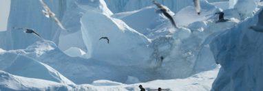 Los veranos se han hecho más largos en Groenlandia debido al cambio climático. GETTY IMAGES