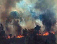 Expertos sostienen que combatir los fuegos en la Amazonía es una cuestión de voluntad antes que de dinero.