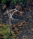 El humo y las llamas han cubierto centenares de miles de hectáreas de selva tropical.